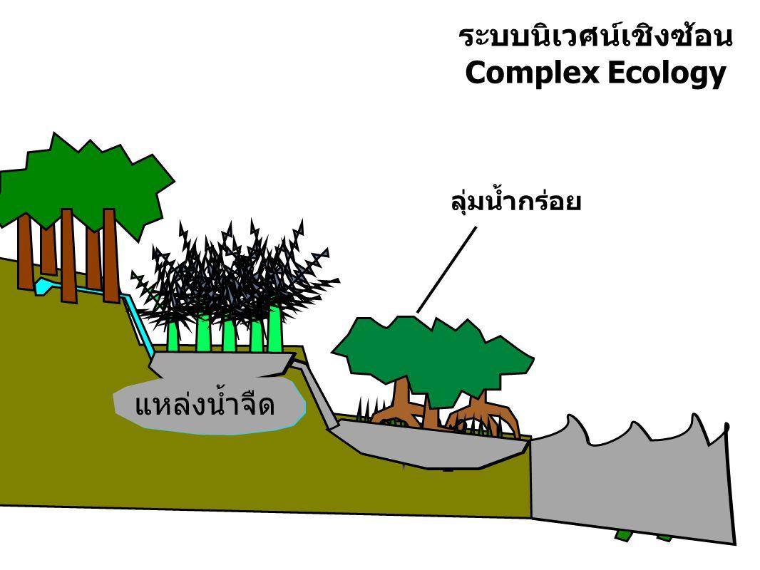 แผนที่เดินดินชุมชนบ้านแหลม บ้านคน ร้านค้า โรงเรียน มัสยิด ป่าโกงกาง ควน / เกาะ นากุ้ง