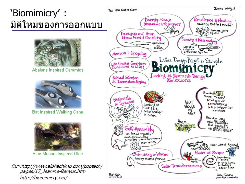 'Biomimicry' : มิติใหม่ของการออกแบบ ที่มา:http://www.alphachimp.com/poptech/ pages/17_Jeanine-Benyus.htm http://biomimicry.net/