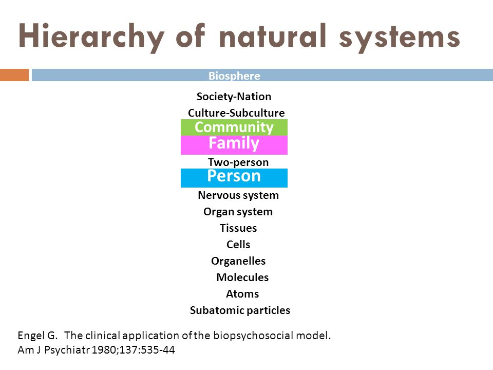 Family System  Whole system  Organ  Hormone  Function  Homeostasis  Hierarchy  Remote pathogen  Change over time (Morphogenesis)