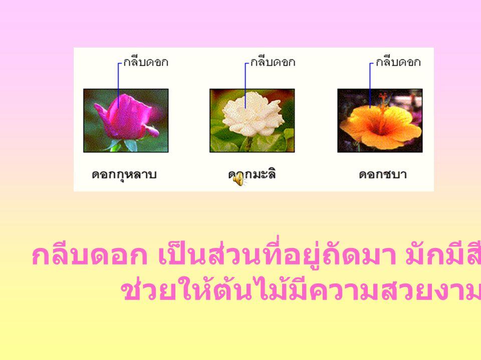 กลีบดอก เป็นส่วนที่อยู่ถัดมา มักมีสีสวย และมีกลิ่นหอม ช่วยให้ต้นไม้มีความสวยงาม