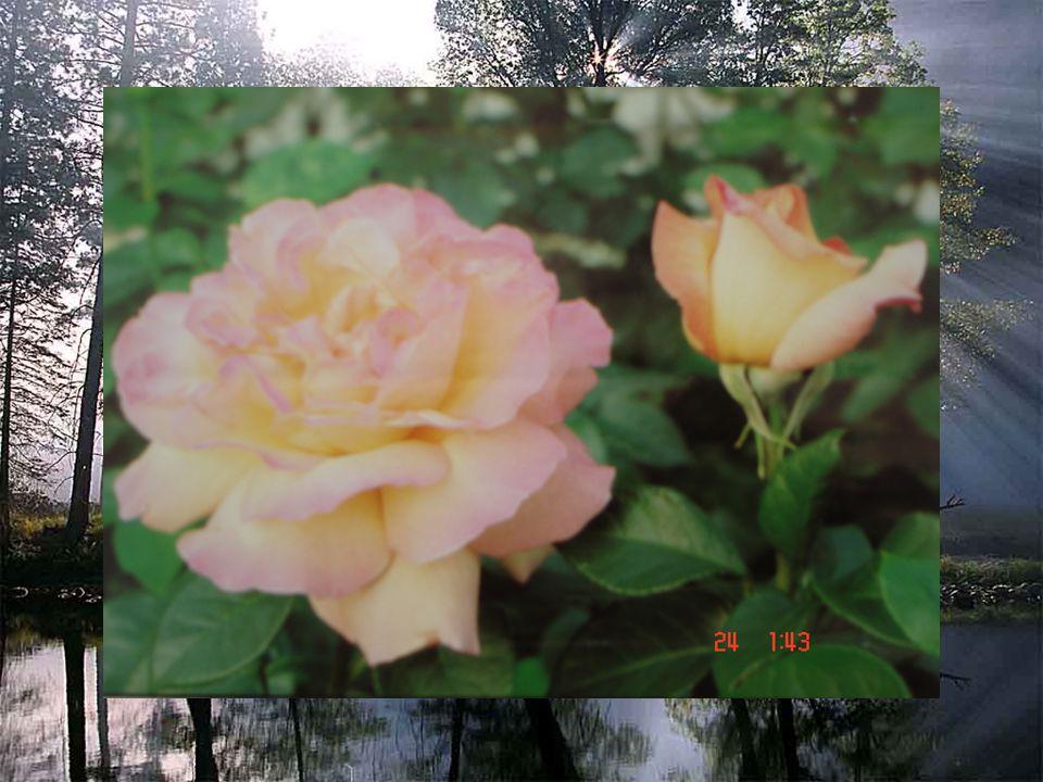 ดอกไม้ใน วรรณคดี กลุ่มสาระ ภาษาไทย โดย นางสาววีณา เลาะ เซ็มวัน โรงเรียนสุเหร่าลำนาย โส