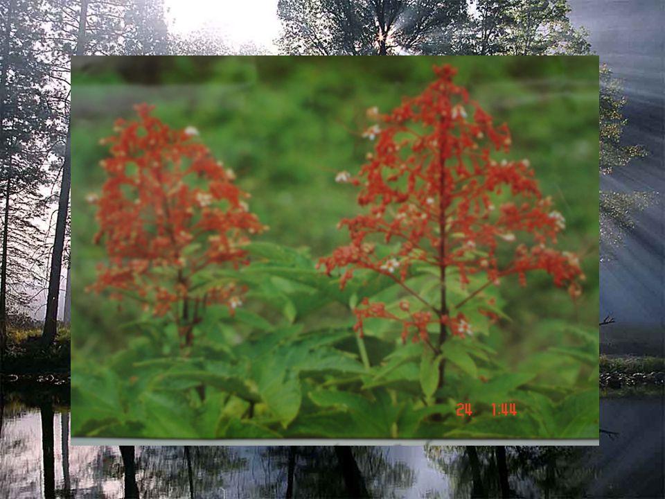 อินทนิล ( รามเกียรติ์ ) เที่ยวชมมิ่งไม้ใน สวน หอมหวนทุกพรรณ บุปผา การเกดแก้วแกม กรรณิการ์ กุหลาบสร้อยฟ้า อินทนิล