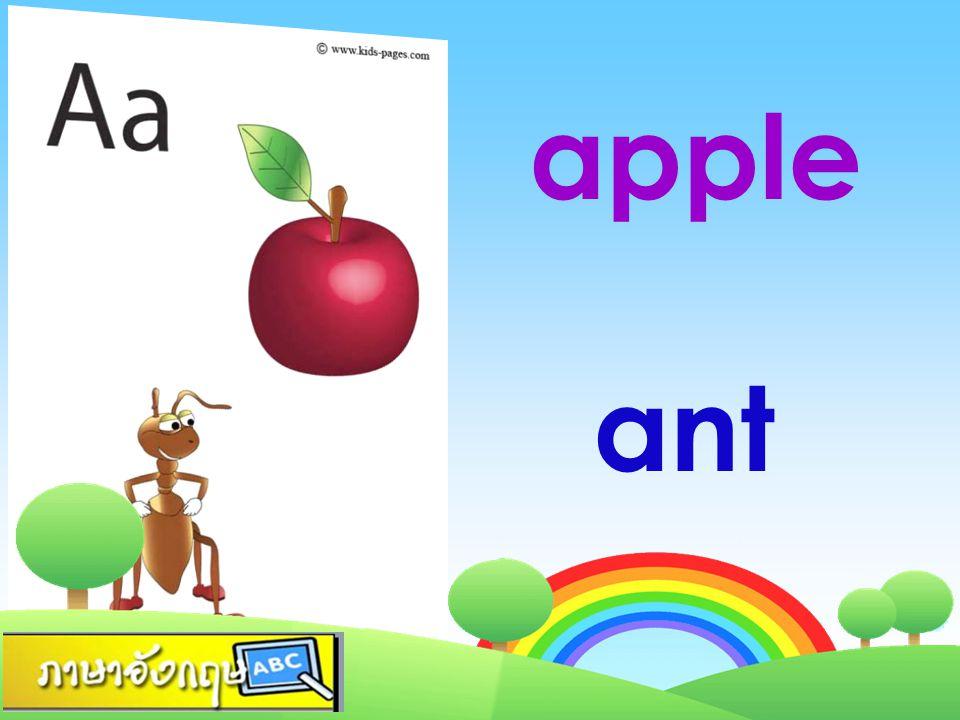 apple ant