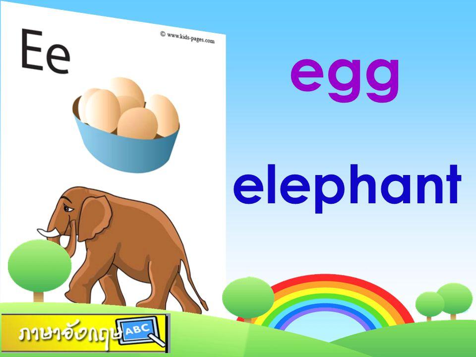 elephant egg