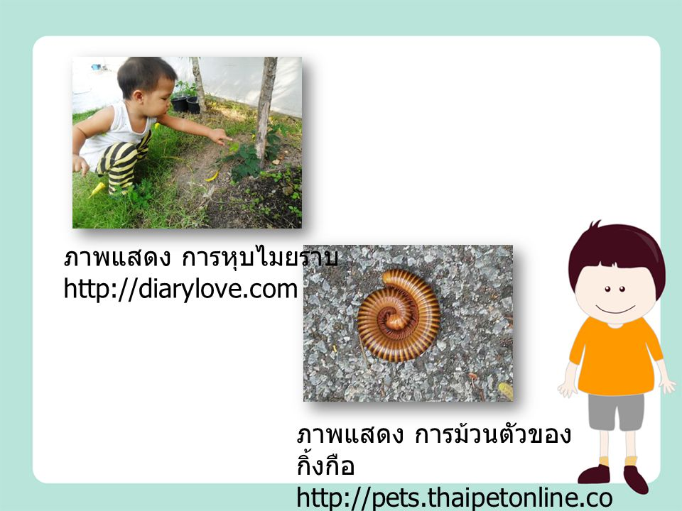 ภาพแสดง การม้วนตัวของ กิ้งกือ http://pets.thaipetonline.co m ภาพแสดง การหุบไมยราบ http://diarylove.com