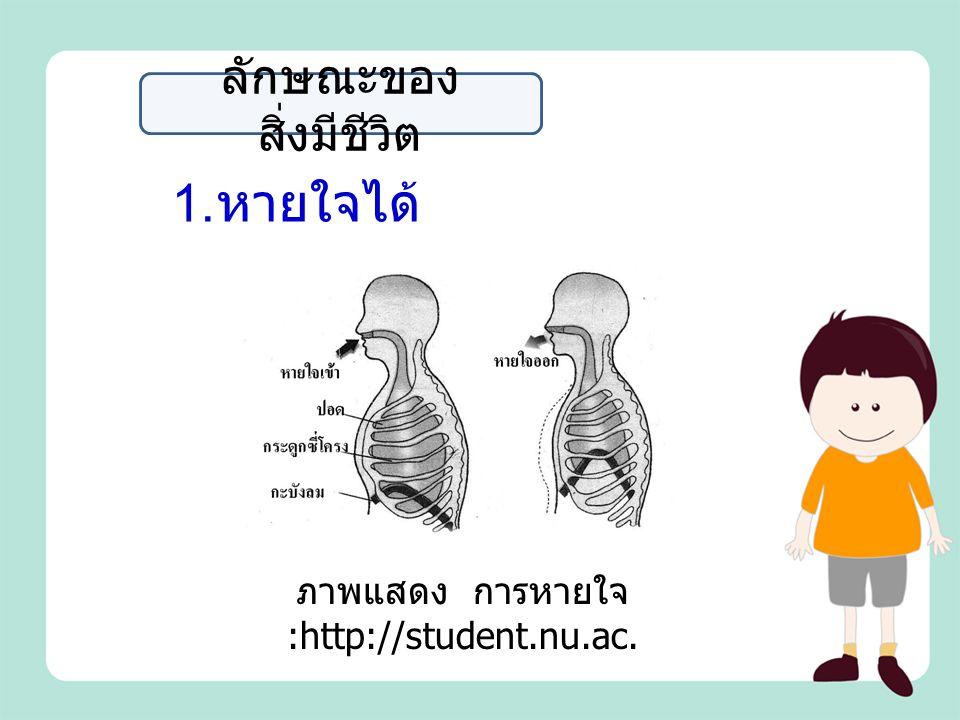 1. หายใจได้ ลักษณะของ สิ่งมีชีวิต ภาพแสดง การหายใจ :http://student.nu.ac.