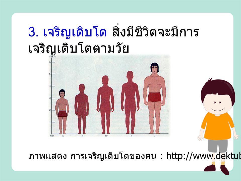 3. เจริญเติบโต สิ่งมีชีวิตจะมีการ เจริญเติบโตตามวัย ภาพแสดง การเจริญเติบโตของคน : http://www.dektube.com