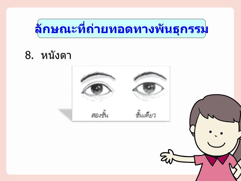 ลักษณะที่ถ่ายทอดทางพันธุกรรม 8. หนังตา