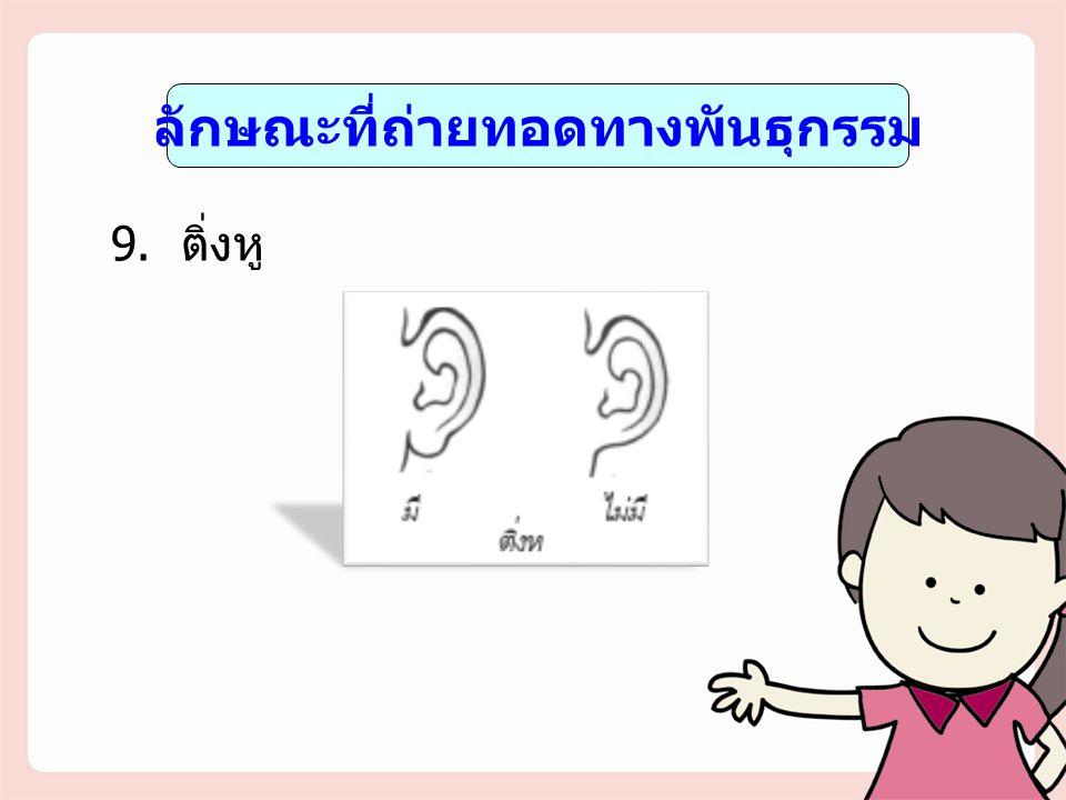 ลักษณะที่ถ่ายทอดทางพันธุกรรม 9. ติ่งหู