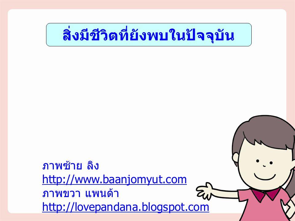 สิ่งมีชีวิตที่ยังพบในปัจจุบัน ภาพซ้าย ลิง http://www.baanjomyut.com ภาพขวา แพนด้า http://lovepandana.blogspot.com http://www.baanjomyut.com