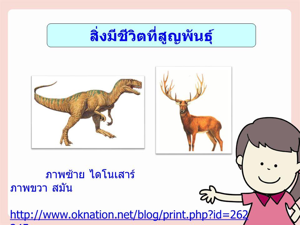 สิ่งมีชีวิตที่สูญพันธุ์ ภาพซ้าย ไดโนเสาร์ ภาพขวา สมัน http://www.oknation.net/blog/print.php?id=262 345 http://www.siamfreestyle.com http://www.oknati