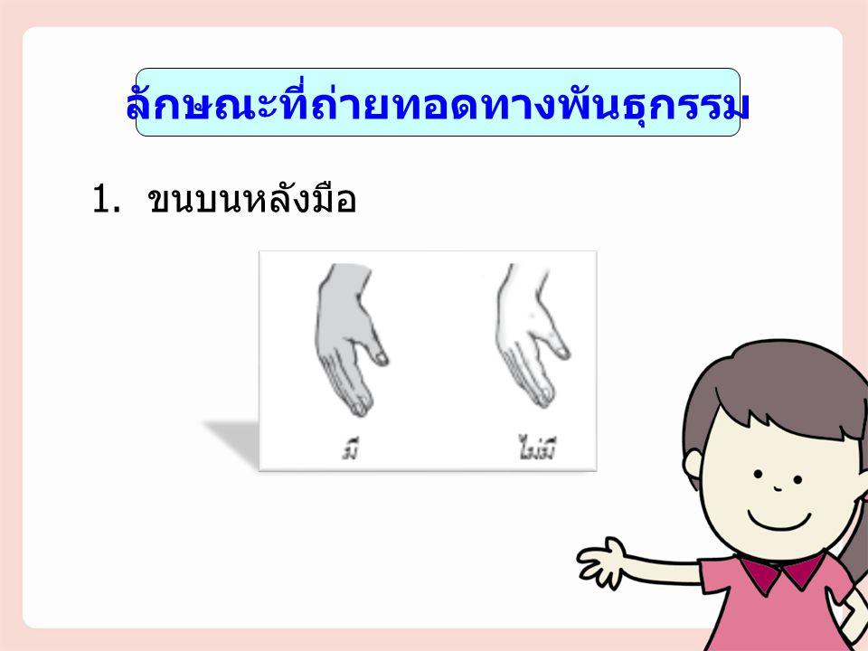 ลักษณะที่ถ่ายทอดทางพันธุกรรม 1. ขนบนหลังมือ