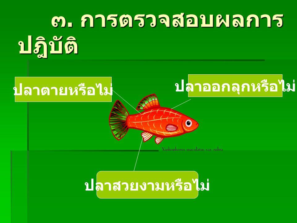 ๓. การตรวจสอบผลการ ปฎิบัติ ๓. การตรวจสอบผลการ ปฎิบัติ ปลาตายหรือไม่ ปลาออกลุกหรือไม่ ปลาสวยงามหรือไม่