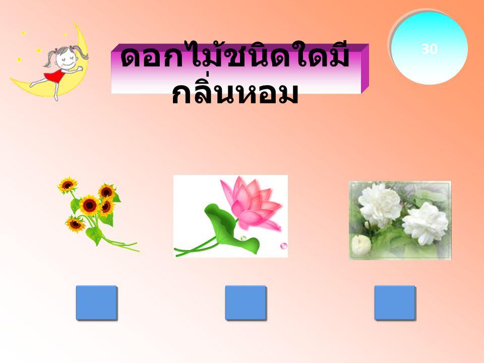 ดอกไม้ชนิดใดมี กลิ่นหอม 30