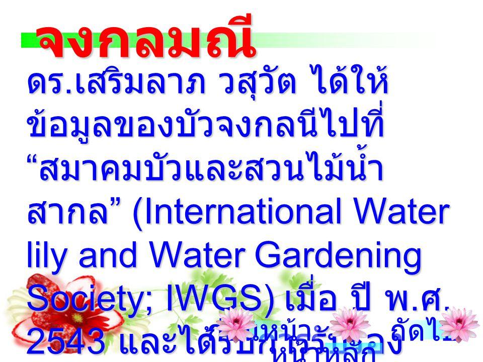 จงกลมณี เป็นบัวเชื้อชาติและ สัญชาติไทยที่มีแต่ในประเทศไทย เท่านั้น เรามีหลักฐานอ้างอิงได้ถึง สมัยสุโขทัย มีลักษณะสำคัญก็คือ ดอกสีขาวอม ชมพูอ่อนที่มีกล