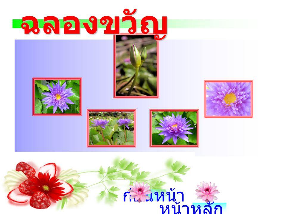 บัวผัน ' ฉลองขวัญ ' หรืออีกชื่อหนึ่ง คือ 'King of Siam' เป็นบัวผันดอกสี ม่วงเข้มที่มีกลีบซ้อน ซึ่งคุณชัยพล ธรรมสุวรรณ ผสมพันธุ์ระหว่าง Director G.T. M
