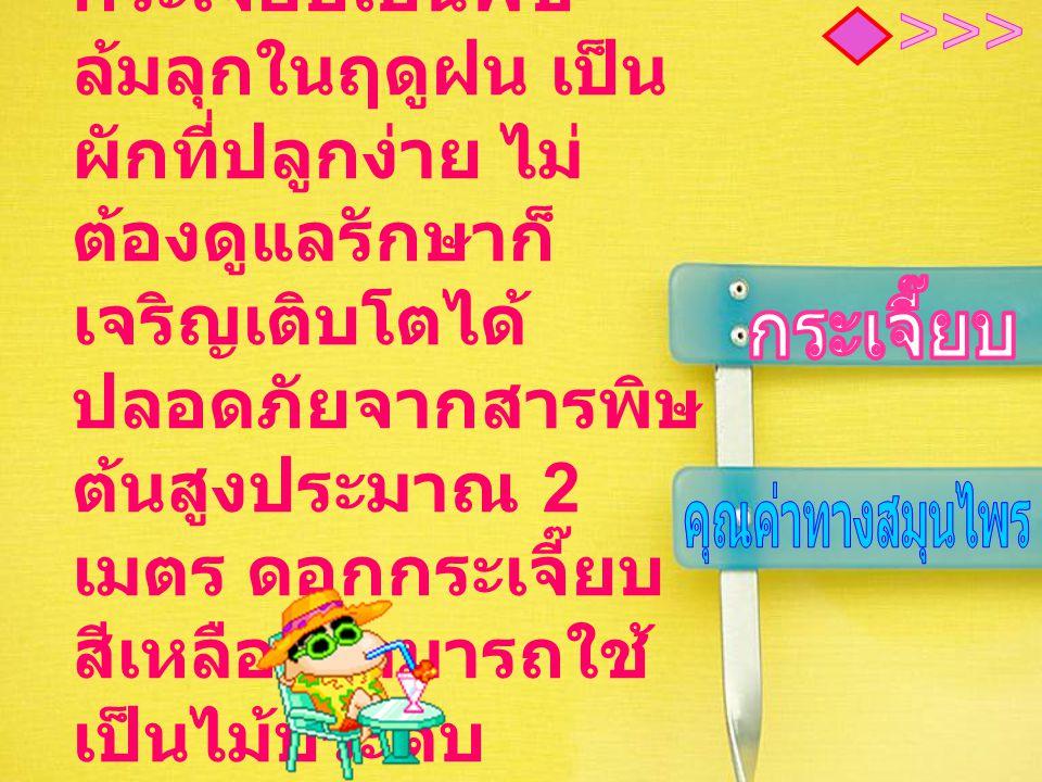 คุณค่าทางยา ตำรายาไทยใช้ต้น แก้ปวดศรีษะ ใบบำรุงน้ำดี ดอก แก้ไข้และลมวิงเวียน รากบำรุงธาตุ บำรุง กำลัง แก้ท้องผูก