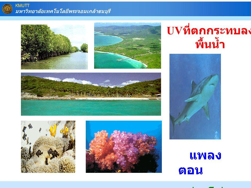 KMUTT มหาวิทยาลัยเทคโนโลยีพระจอมเกล้าธนบุรี แพลง ตอน ห่วงโซ่ อาหาร UV ที่ตกกระทบลง พื้นน้ำ