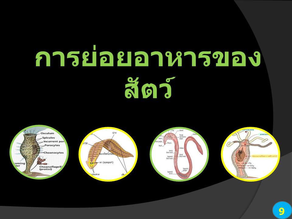 9 การย่อยอาหารของ สัตว์