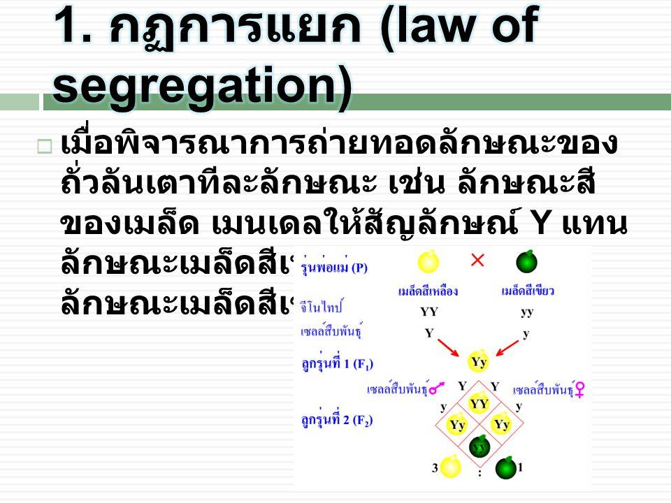  เมื่อพิจารณาการถ่ายทอดลักษณะของ ถั่วลันเตาทีละลักษณะ เช่น ลักษณะสี ของเมล็ด เมนเดลให้สัญลักษณ์ Y แทน ลักษณะเมล็ดสีเหลือง และ y แทน ลักษณะเมล็ดสีเขียว