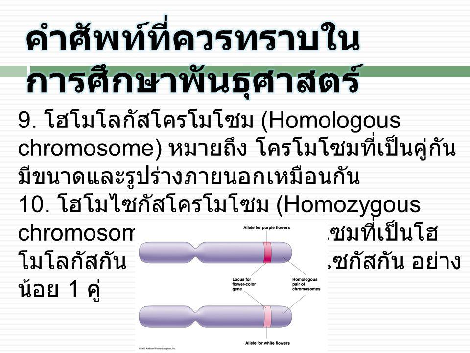 9. โฮโมโลกัสโครโมโซม (Homologous chromosome) หมายถึง โครโมโซมที่เป็นคู่กัน มีขนาดและรูปร่างภายนอกเหมือนกัน 10. โฮโมไซกัสโครโมโซม (Homozygous chromosom