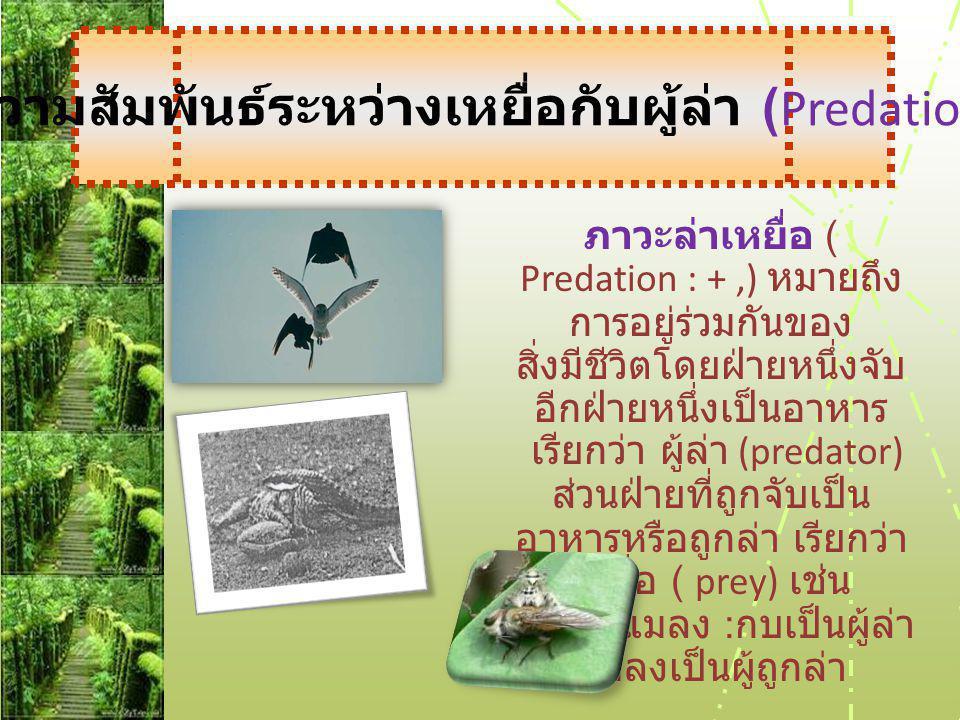 ภาวะล่าเหยื่อ ( Predation : +,) หมายถึง การอยู่ร่วมกันของ สิ่งมีชีวิตโดยฝ่ายหนึ่งจับ อีกฝ่ายหนึ่งเป็นอาหาร เรียกว่า ผู้ล่า (predator) ส่วนฝ่ายที่ถูกจับเป็น อาหารหรือถูกล่า เรียกว่า เหยื่อ ( prey) เช่น - กบกับแมลง : กบเป็นผู้ล่า แมลงเป็นผู้ถูกล่า ความสัมพันธ์ระหว่างเหยื่อกับผู้ล่า ( Predation )