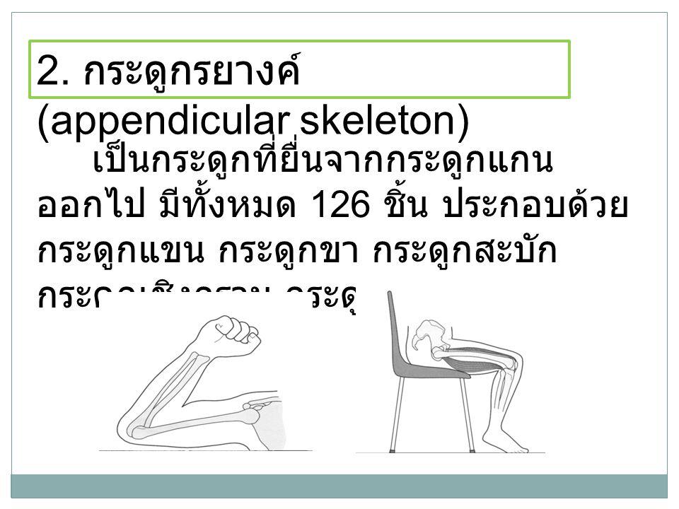 เป็นกระดูกที่ยื่นจากกระดูกแกน ออกไป มีทั้งหมด 126 ชิ้น ประกอบด้วย กระดูกแขน กระดูกขา กระดูกสะบัก กระดูกเชิงกราน กระดูกไหปลาร้า 2. กระดูกรยางค์ (append