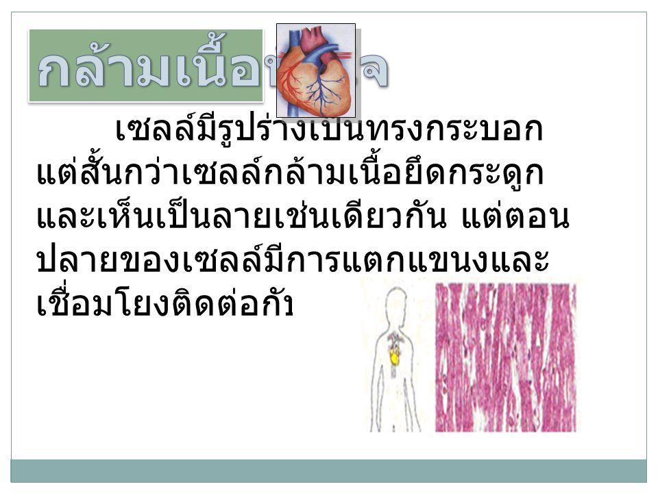 เซลล์มีรูปร่างเป็นทรงกระบอก แต่สั้นกว่าเซลล์กล้ามเนื้อยึดกระดูก และเห็นเป็นลายเช่นเดียวกัน แต่ตอน ปลายของเซลล์มีการแตกแขนงและ เชื่อมโยงติดต่อกับเซลล์ข