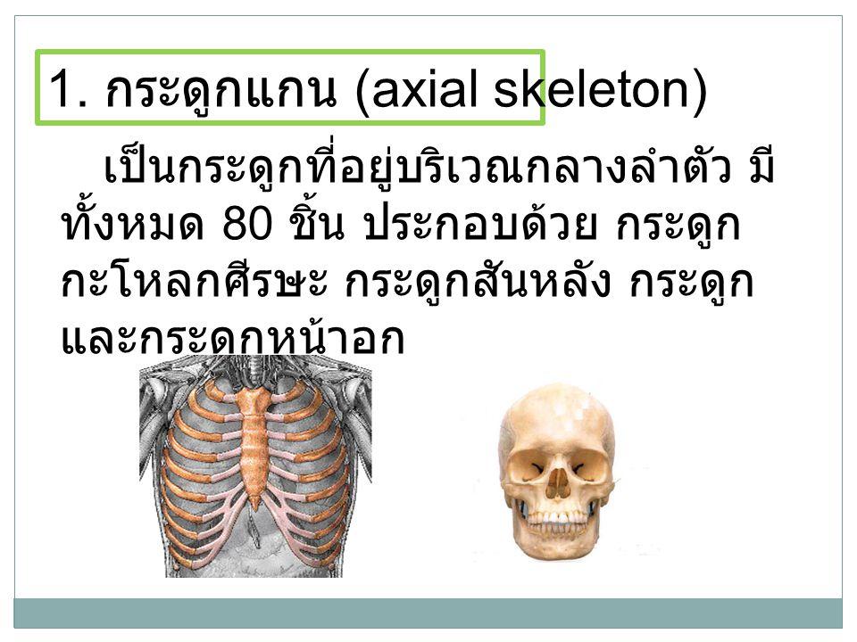 เป็นกระดูกที่อยู่บริเวณกลางลำตัว มี ทั้งหมด 80 ชิ้น ประกอบด้วย กระดูก กะโหลกศีรษะ กระดูกสันหลัง กระดูก และกระดูกหน้าอก 1. กระดูกแกน (axial skeleton)