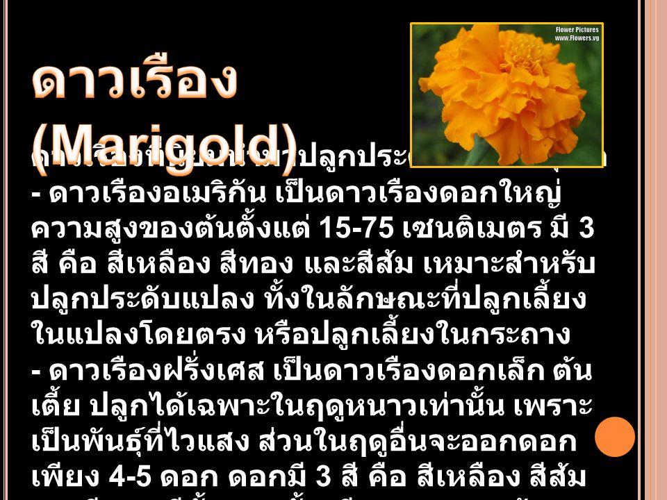 นิยมปลูกเป็นไม้ประดับ มี 2 พันธุ์คือ - ดาวกระจายสีเหลือง ดาวกระจายประเภทนี้ พบเห็นอยู่ทั่วไปในธรรมชาติทุกจังหวัดของ ประเทศไทย เป็นไม้ดอกล้มลุก ปลูกง่ายเลี้ยง ง่าย ไม่ต้องดูแลรักษามากนัก แต่มีเฉพาะดอก สีเหลืองและสีส้มเท่านั้น มี - ดาวกระจายสีอื่น ดาวกระจายประเภทนี้มีสี ขาว สีชมพู สีม่วง สีบานเย็น และสีแดง ไม่มีสี เหลือง ใบมีลักษณะคล้ายผักชีลาว ดอกมี ขนาดใหญ่ชั้นเดียว