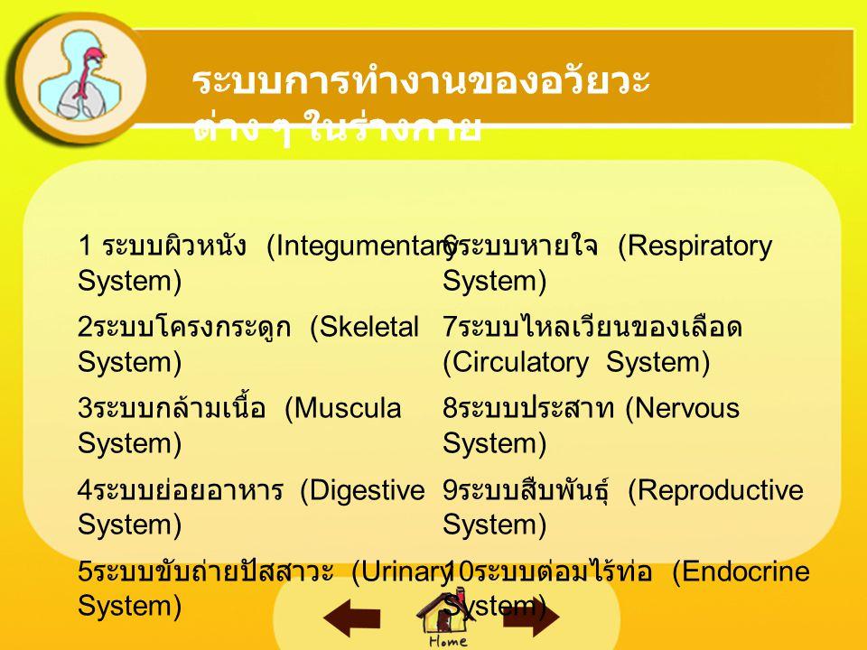  ระบบผิวหนัง (Integumentary System)  ระบบโครงกระดูก (Skeletal System)  ระบบกล้ามเนื้อ (Muscula System)  ระบบย่อยอาหาร (Digestive System)  ระบบขับถ่ายปัสสาวะ (Urinary System)  ระบบหายใจ (Respiratory System)  ระบบไหลเวียนของเลือด (Circulatory System)  ระบบประสาท (Nervous System)  ระบบสืบพันธุ์ (Reproductive System)  0 ระบบต่อมไร้ท่อ (Endocrine System) ระบบการทำงานของอวัยวะ ต่าง ๆ ในร่างกาย