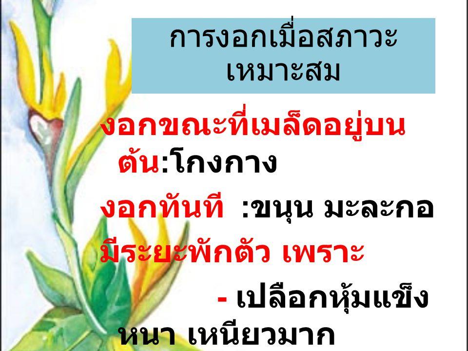 งอกขณะที่เมล็ดอยู่บน ต้น : โกงกาง งอกทันที : ขนุน มะละกอ มีระยะพักตัว เพราะ - เปลือกหุ้มแข็ง หนา เหนียวมาก เช่น พุทรา มะขาม ฝรั่ง การงอกเมื่อสภาวะ เหม
