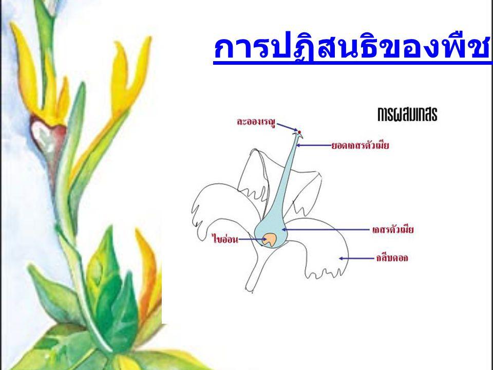 การปฏิสนธิของพืชดอก
