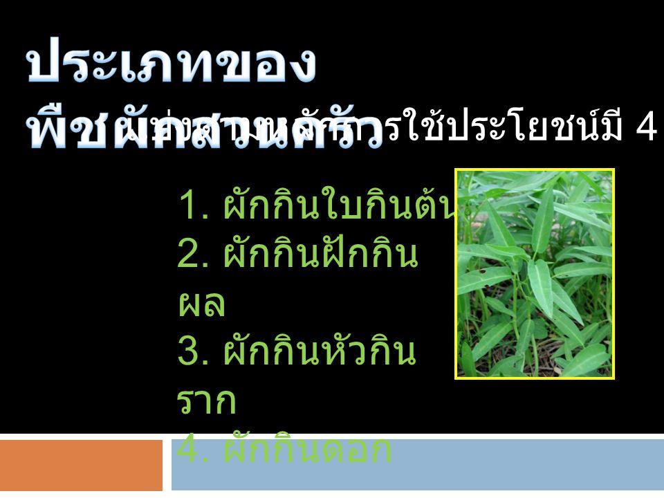 แบ่งตามหลักการใช้ประโยชน์มี 4 ประเภท 1. ผักกินใบกินต้น 2. ผักกินฝักกิน ผล 3. ผักกินหัวกิน ราก 4. ผักกินดอก
