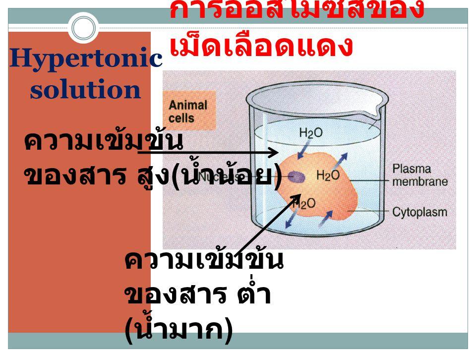 Hypertonic solution การออสโมซีสของ เม็ดเลือดแดง ความเข้มข้น ของสาร สูง ( น้ำน้อย ) ความเข้มข้น ของสาร ต่ำ ( น้ำมาก )