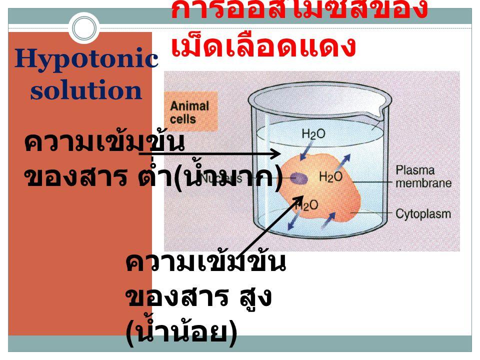 Hyp0tonic solution การออสโมซีสของ เม็ดเลือดแดง ความเข้มข้น ของสาร ต่ำ ( น้ำมาก ) ความเข้มข้น ของสาร สูง ( น้ำน้อย )