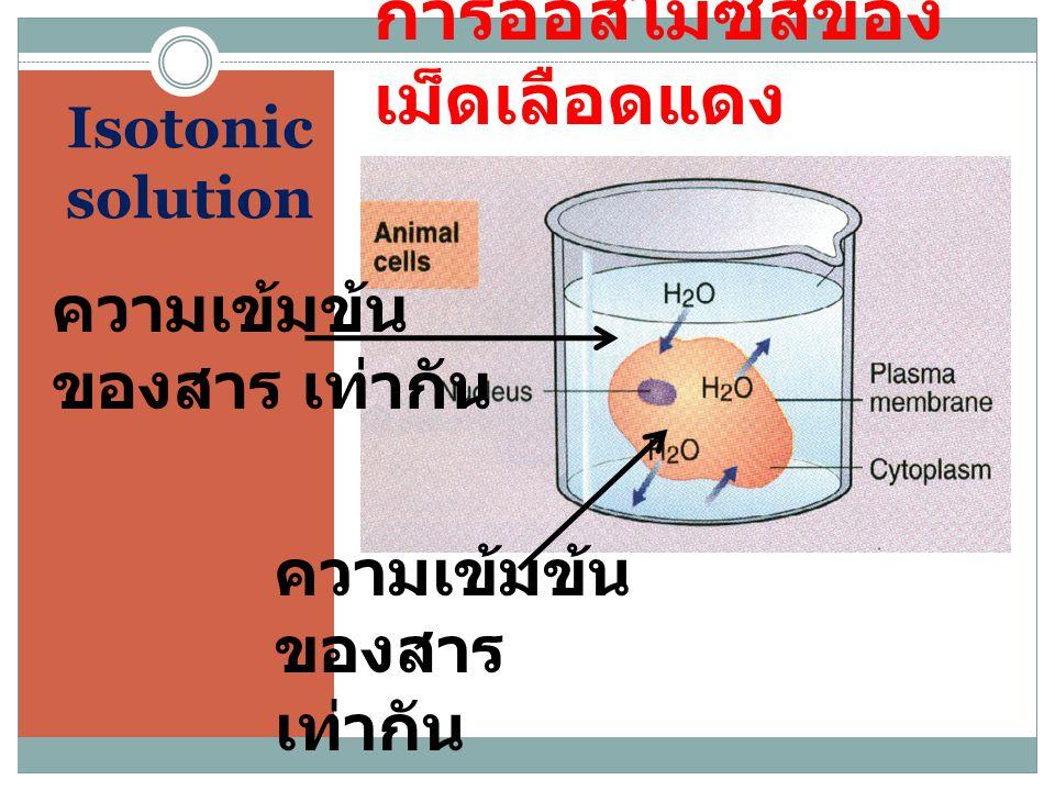 Isotonic solution การออสโมซีสของ เม็ดเลือดแดง ความเข้มข้น ของสาร เท่ากัน ความเข้มข้น ของสาร เท่ากัน