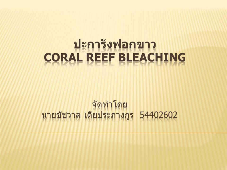  1.ปะการัง  2. ความสำคัญของแนวปะการัง  3. สาเหตุทำให้เกิดปะการังฟอกขาว  4.