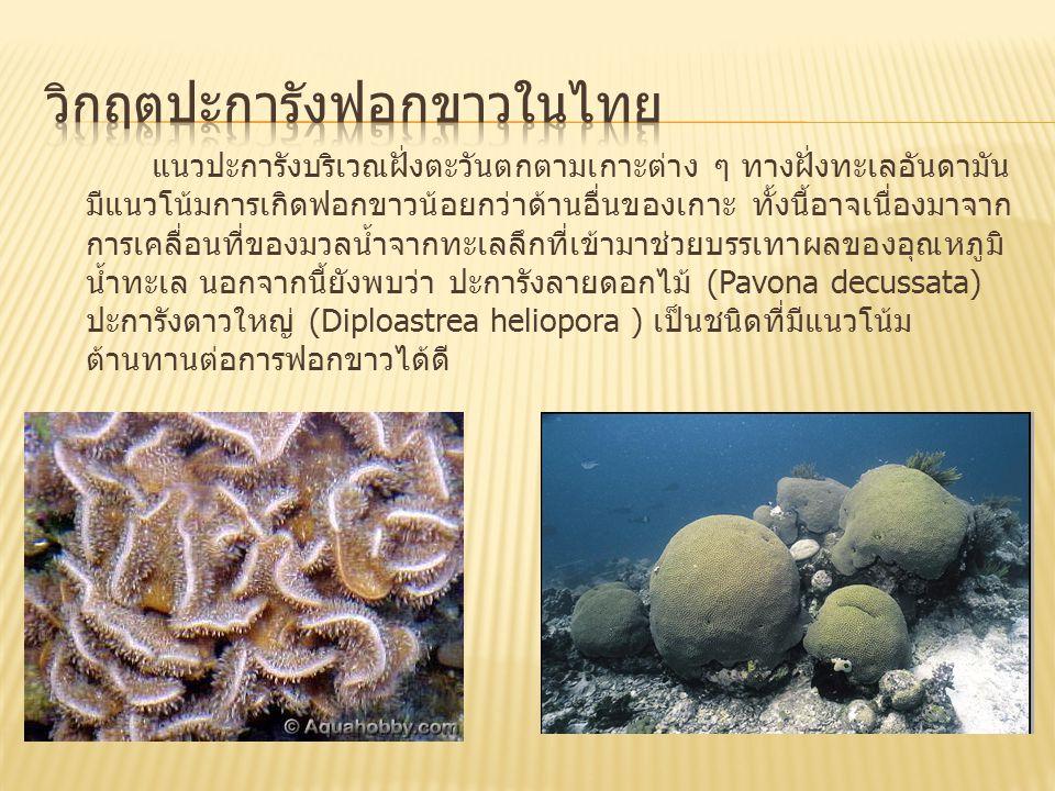 แนวปะการังบริเวณฝั่งตะวันตกตามเกาะต่าง ๆ ทางฝั่งทะเลอันดามัน มีแนวโน้มการเกิดฟอกขาวน้อยกว่าด้านอื่นของเกาะ ทั้งนี้อาจเนื่องมาจาก การเคลื่อนที่ของมวลน้ำจากทะเลลึกที่เข้ามาช่วยบรรเทาผลของอุณหภูมิ น้ำทะเล นอกจากนี้ยังพบว่า ปะการังลายดอกไม้ (Pavona decussata) ปะการังดาวใหญ่ (Diploastrea heliopora ) เป็นชนิดที่มีแนวโน้ม ต้านทานต่อการฟอกขาวได้ดี