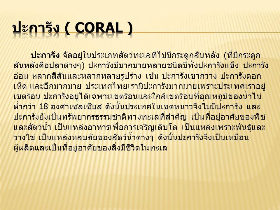 ปะการัง จัดอยู่ในประเภทสัตว์ทะเลที่ไม่มีกระดูกสันหลัง (ที่มีกระดูก สันหลังคือปลาต่างๆ) ปะการังมีมากมายหลายชนิดมีทั้งปะการังแข็ง ปะการัง อ่อน หลากสีสันและหลากหลายรูปร่าง เช่น ปะการังเขากวาง ปะการังดอก เห็ด และอีกมากมาย ประเทศไทยเรามีปะการังมากมายเพราะประเทศเราอยู่ เขตร้อน ปะการังอยู่ได้เฉพาะเขตร้อนและใกล้เขตร้อนที่อุณหภูมิของน้ำไม่ ต่ำกว่า 18 องศาเซลเซียส ดังนั้นประเทศในเขตหนาวจึงไม่มีปะการัง และ ปะการังยังเป็นทรัพยากรธรรมชาติทางทะเลที่สำคัญ เป็นที่อยู่อาศัยของพืช และสัตว์น้ำ เป็นแหล่งอาหารเพื่อการเจริญเติบโต เป็นแหล่งเพราะพันธุ์และ วางไข่ เป็นแหล่งหลบภัยของสัตว์น้ำต่างๆ ดังนั้นปะการังจึงเป็นเหมือน ผู้ผลิตและเป็นที่อยู่อาศัยของสิ่งมีชีวิตในทะเล