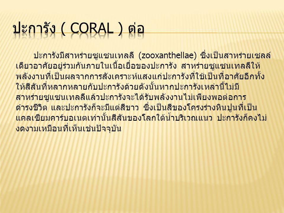 ปะการังมีสาหร่ายซูแซนเทลลี (zooxanthellae) ซึ่งเป็นสาหร่ายเซลล์ เดียวอาศัยอยู่ร่วมกันภายในเนื้อเยื่อของปะการัง สาหร่ายซูแซนเทลลีให้ พลังงานที่เป็นผลจากการสังเคราะห์แสงแก่ปะการังที่ใช้เป็นที่อาศัยอีกทั้ง ให้สีสันที่หลากหลายกับปะการังด้วยดังนั้นหากปะการังเหล่านี้ไม่มี สาหร่ายซูแซนเทลลีแล้วปะการังจะได้รับพลังงานไม่เพียงพอต่อการ ดำรงชีวิต และปะการังก็จะมีแต่สีขาว ซึ่งเป็นสีของโครงร่างหินปูนที่เป็น แคลเซียมคาร์บอเนตเท่านั้นสีสันของโลกใต้น้ำบริเวณแนว ปะการังก็คงไม่ งดงามเหมือนที่เห็นเช่นปัจจุบัน