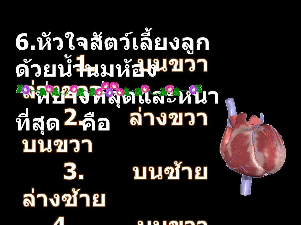 6. หัวใจสัตว์เลี้ยงลูก ด้วยน้ำนมห้อง ที่บางที่สุดและหนา ที่สุด คือ