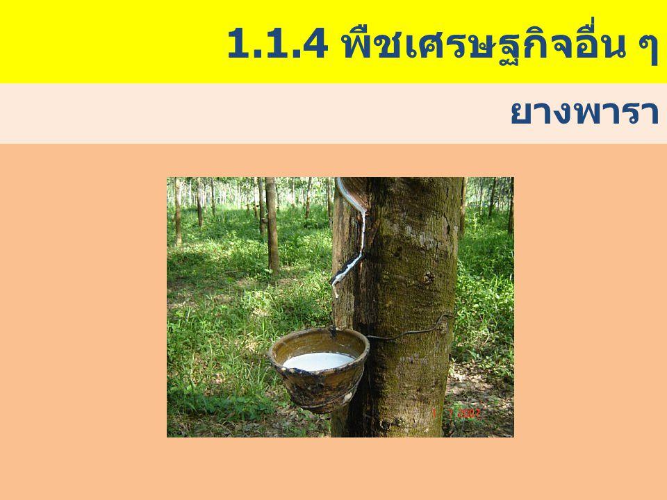 1.1.4 พืชเศรษฐกิจอื่น ๆ ยางพารา