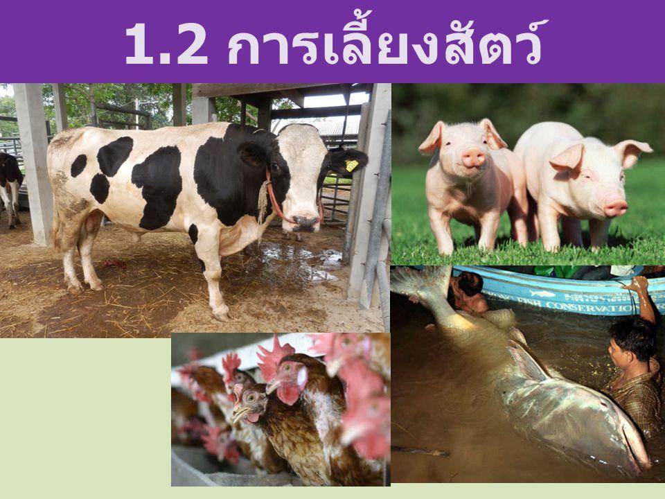 1.2 การเลี้ยงสัตว์