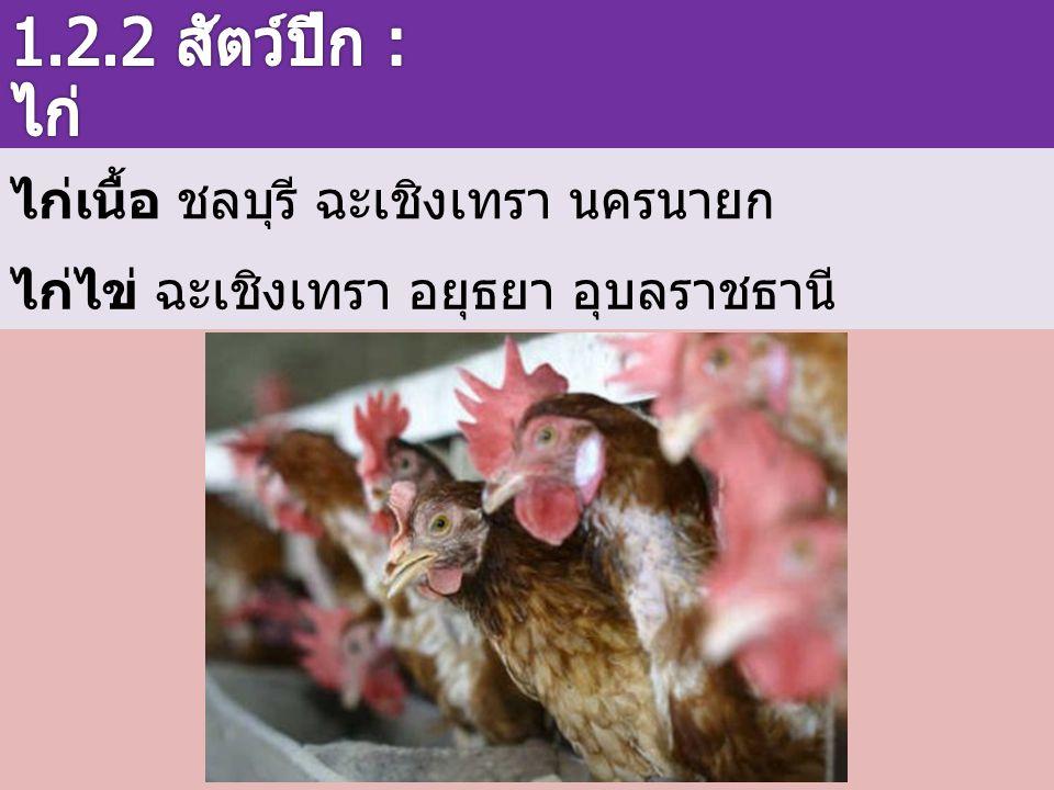 ไก่เนื้อ ชลบุรี ฉะเชิงเทรา นครนายก ไก่ไข่ ฉะเชิงเทรา อยุธยา อุบลราชธานี