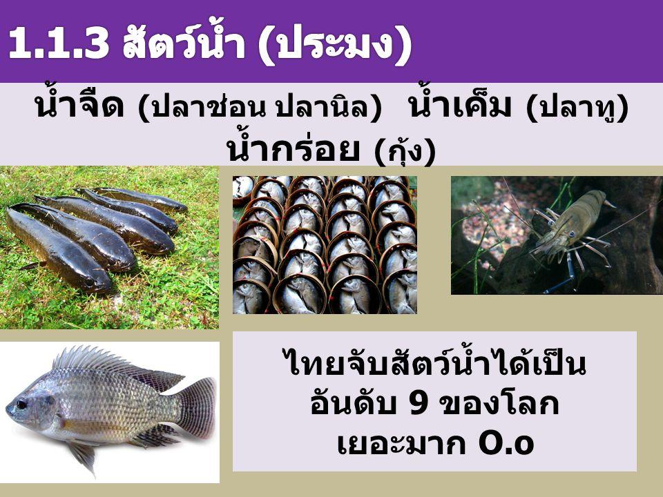 น้ำจืด ( ปลาช่อน ปลานิล ) น้ำเค็ม ( ปลาทู ) น้ำกร่อย ( กุ้ง ) ไทยจับสัตว์น้ำได้เป็น อันดับ 9 ของโลก เยอะมาก O.o