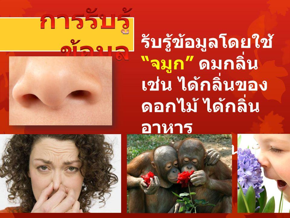รับรู้ข้อมูลโดยใช้ จมูก ดมกลิ่น เช่น ได้กลิ่นของ ดอกไม้ ได้กลิ่น อาหาร ได้กลิ่นเหม็น ได้ กลิ่นหอม