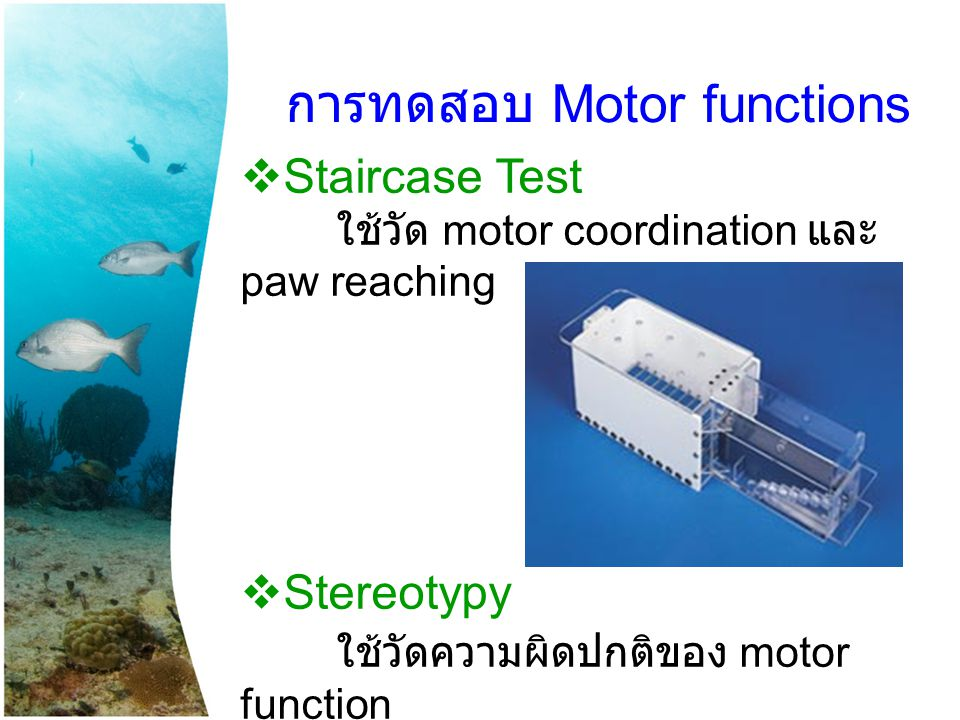  Staircase Test ใช้วัด motor coordination และ paw reaching  Stereotypy ใช้วัดความผิดปกติของ motor function การทดสอบ Motor functions
