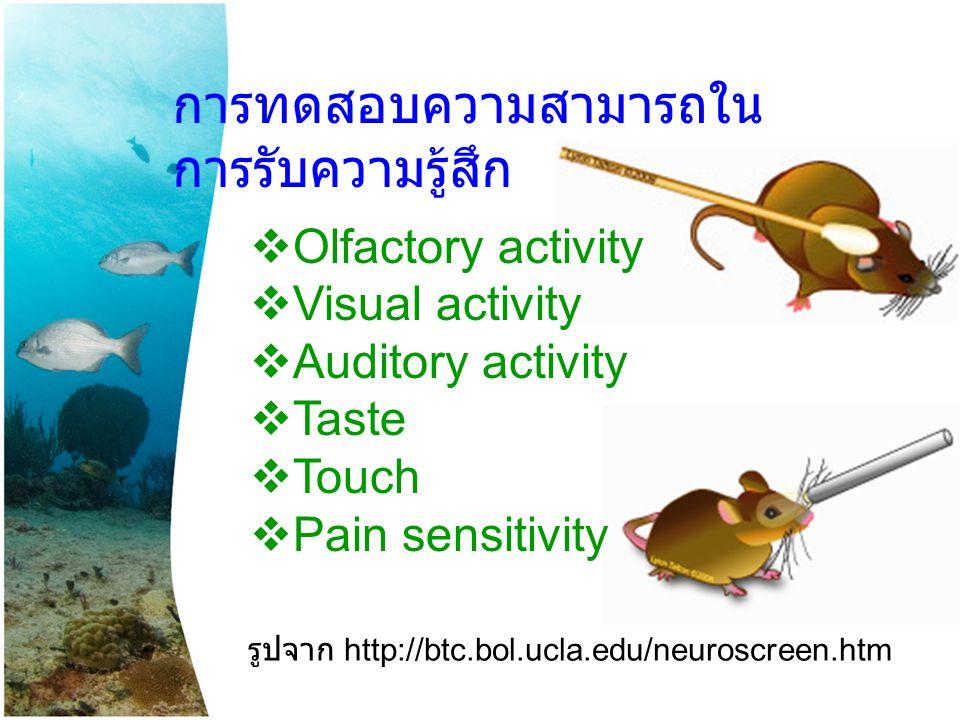 การทดสอบความสามารถใน การรับความรู้สึก  Olfactory activity  Visual activity  Auditory activity  Taste  Touch  Pain sensitivity รูปจาก http://btc.