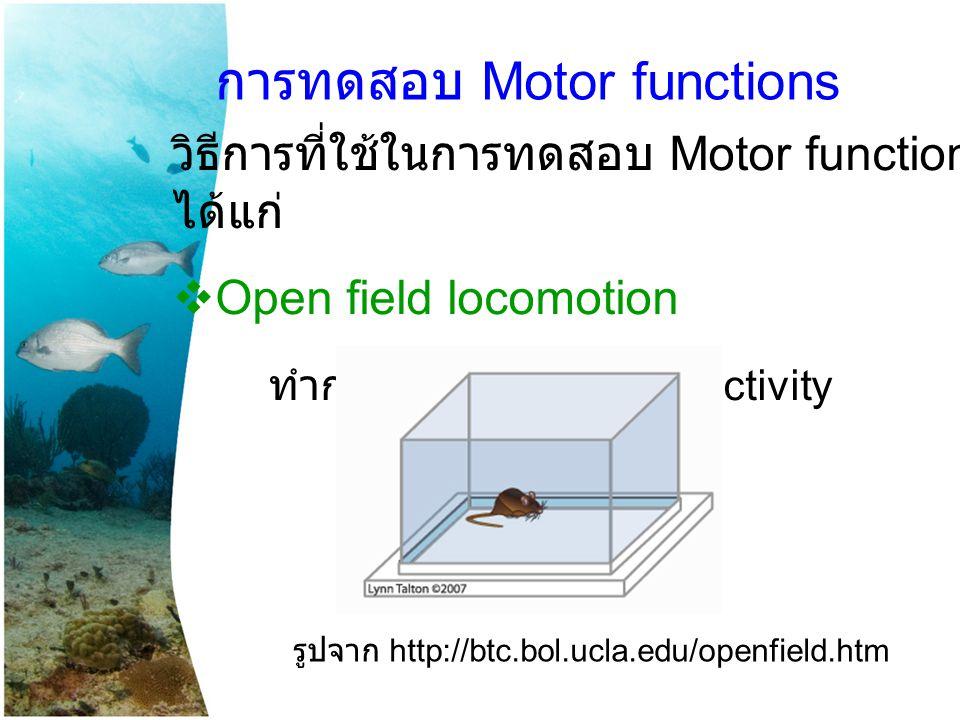 การทดสอบ Motor functions วิธีการที่ใช้ในการทดสอบ Motor function ได้แก่  Open field locomotion ทำการวัด spontaneous activity รูปจาก http://btc.bol.ucl